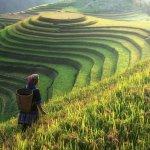 Çinli Bir Öğretmen, 1 Günde 100 Milyon Pirinç Sayma Ödevi Verdi!