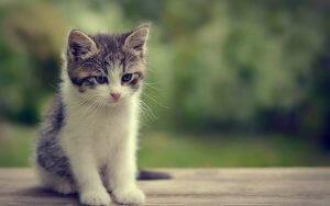 Bu Caniliktir: Bir Şirket Kedi ve Köpekleri Kiralıyor!
