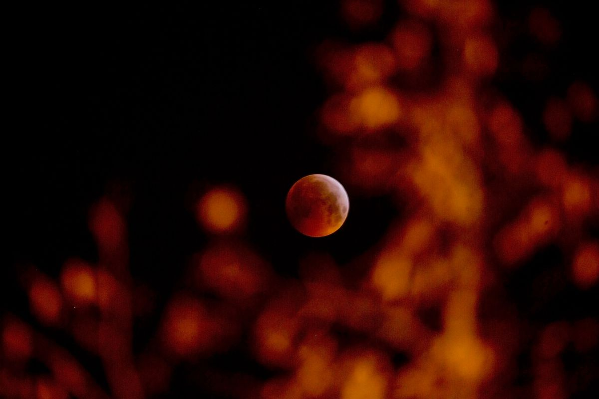 Çarpıcı Fotoğraflar ile Kanlı Ay'ın İhtişamlı Görüntüleri!