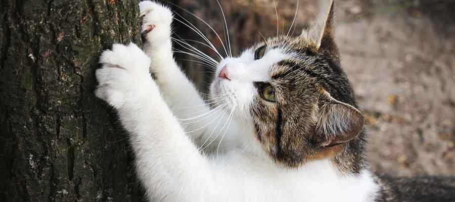 Ağacı tırnaklayan kedi